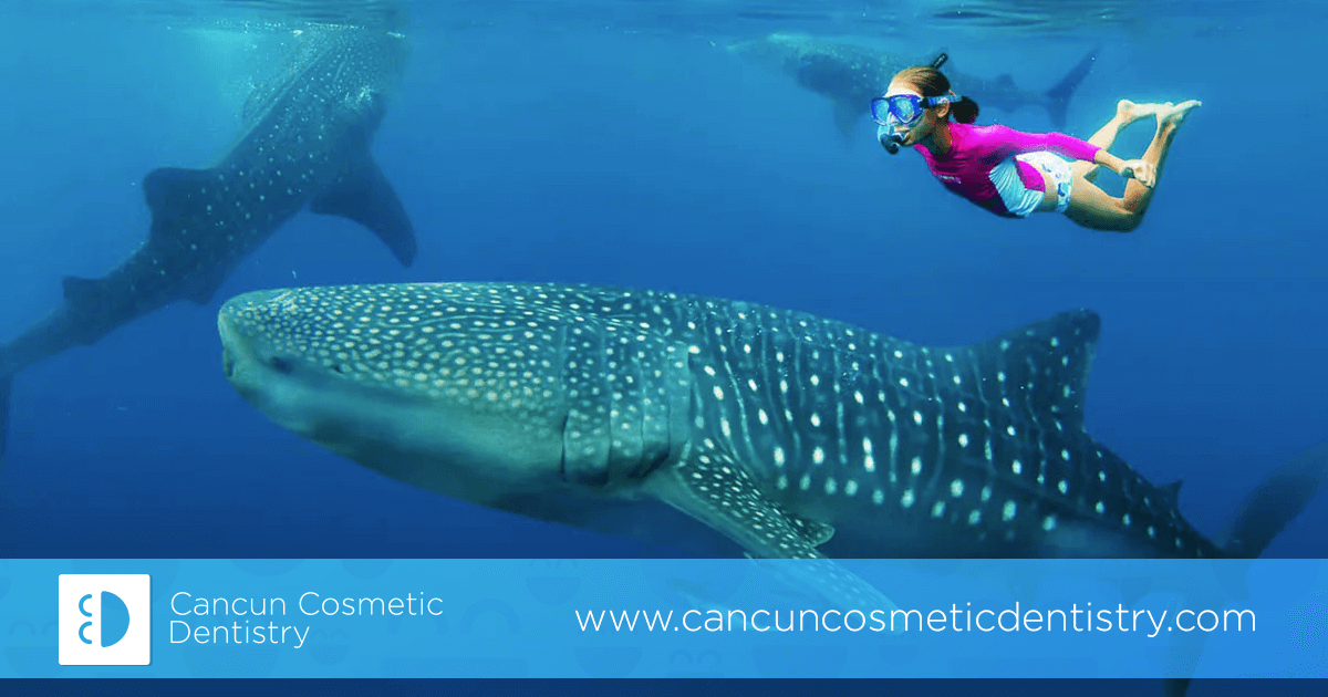 Swim with a Whale Shark on your dental vacation in Cancun!