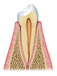 Parts of a tooth. Cancun Cosmetic Dentistry.